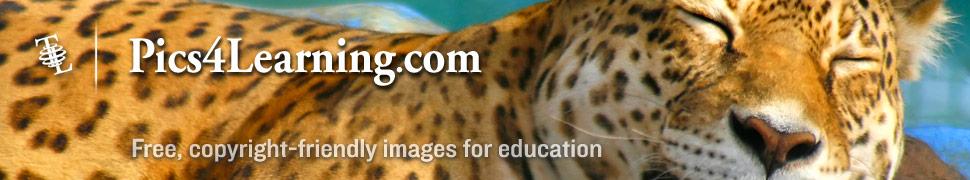 external image banner_p4l-leopard.jpg